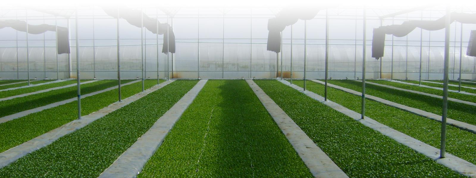 贵州农产品网络推广
